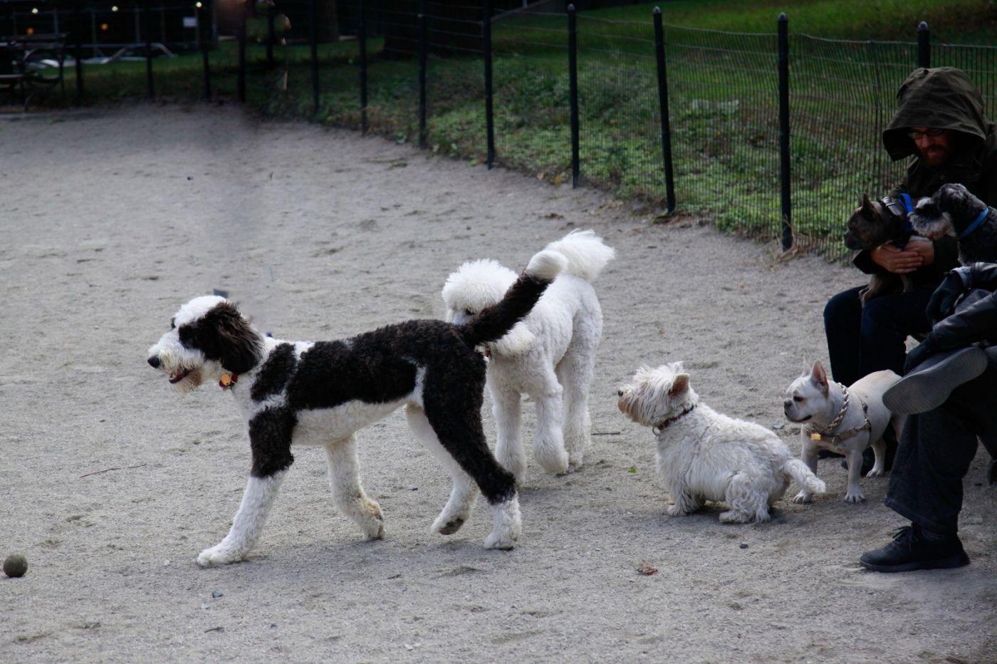 养狗爱好者带了爱犬欢聚一堂,相互交流_图1-10