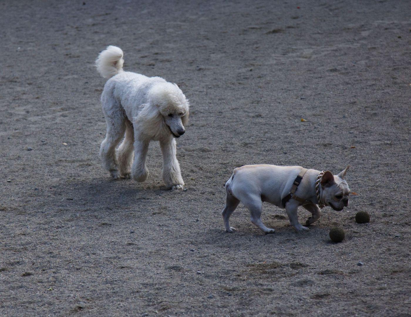 养狗爱好者带了爱犬欢聚一堂,相互交流_图1-12
