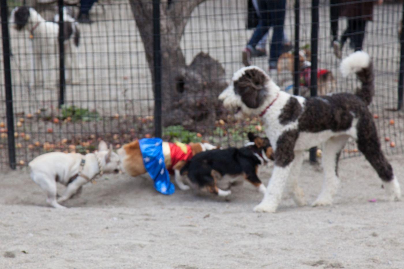 养狗爱好者带了爱犬欢聚一堂,相互交流_图1-14