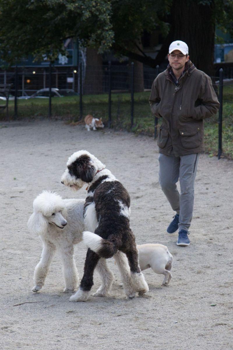 养狗爱好者带了爱犬欢聚一堂,相互交流_图1-13