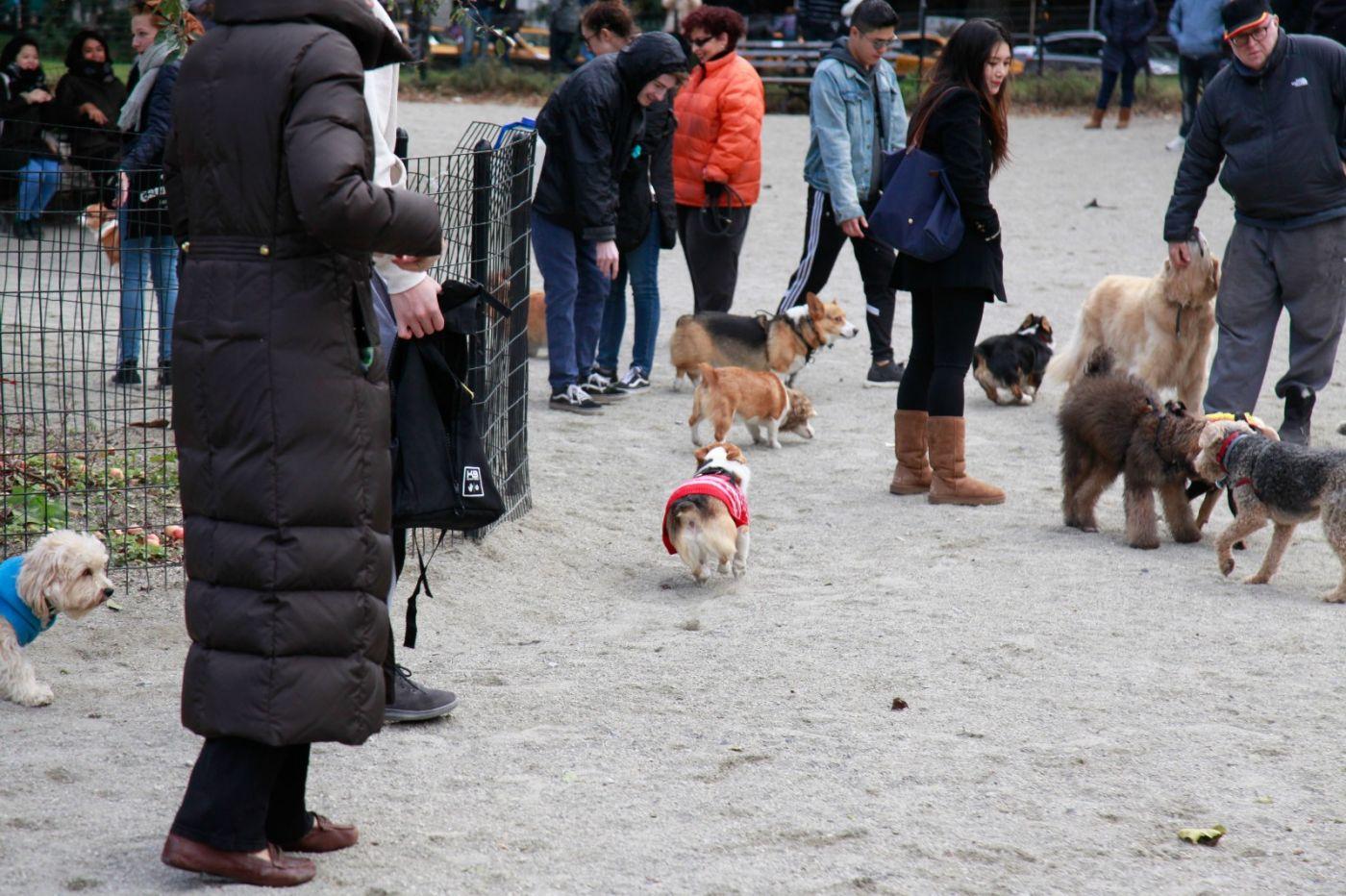 养狗爱好者带了爱犬欢聚一堂,相互交流_图1-21