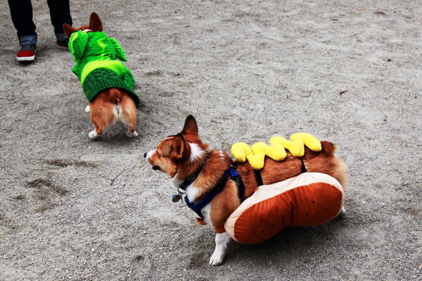 养狗爱好者带了爱犬欢聚一堂,相互交流_图1-20