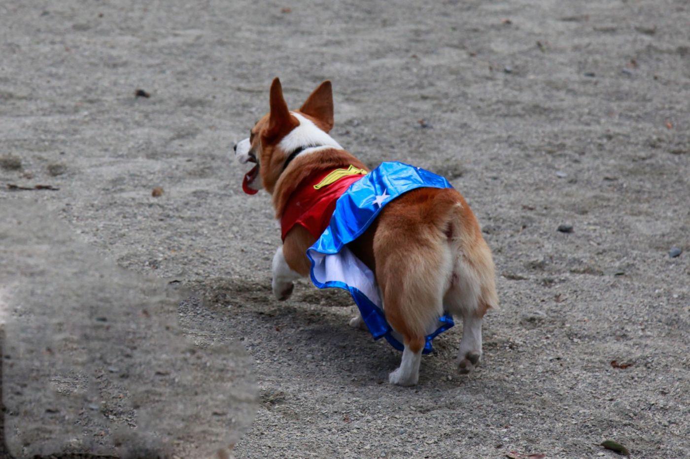 养狗爱好者带了爱犬欢聚一堂,相互交流_图1-19