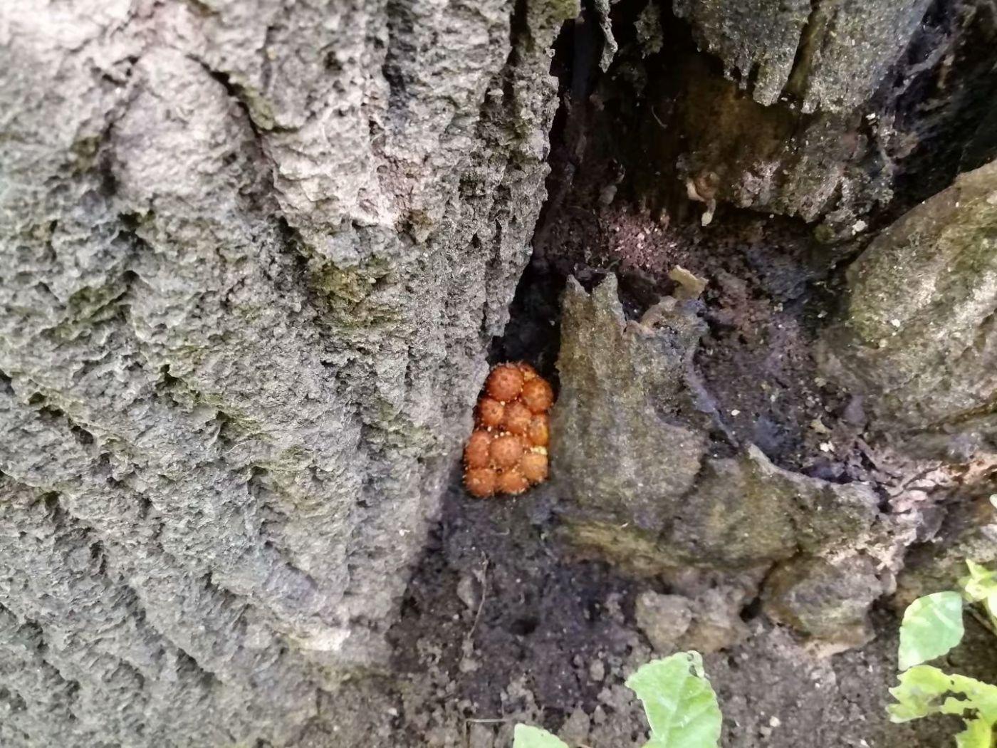 树林里的野蘑菇(图)_图1-13