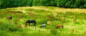 北欧旅途,路边牛羊的幸福生活