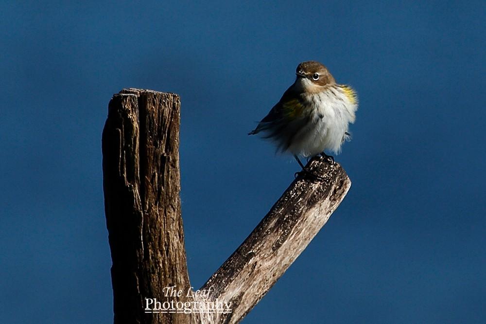 拍鸟好季节        【一片叶】_图1-12