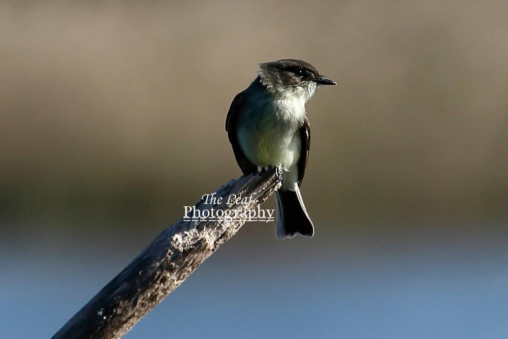 拍鸟好季节        【一片叶】_图1-14