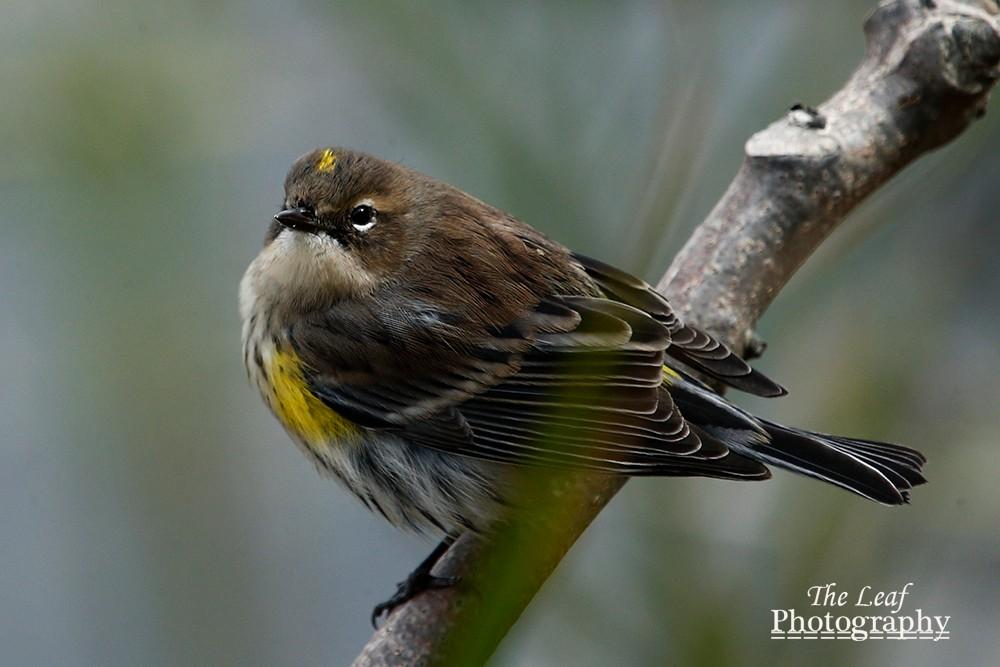 拍鸟好季节        【一片叶】_图1-17