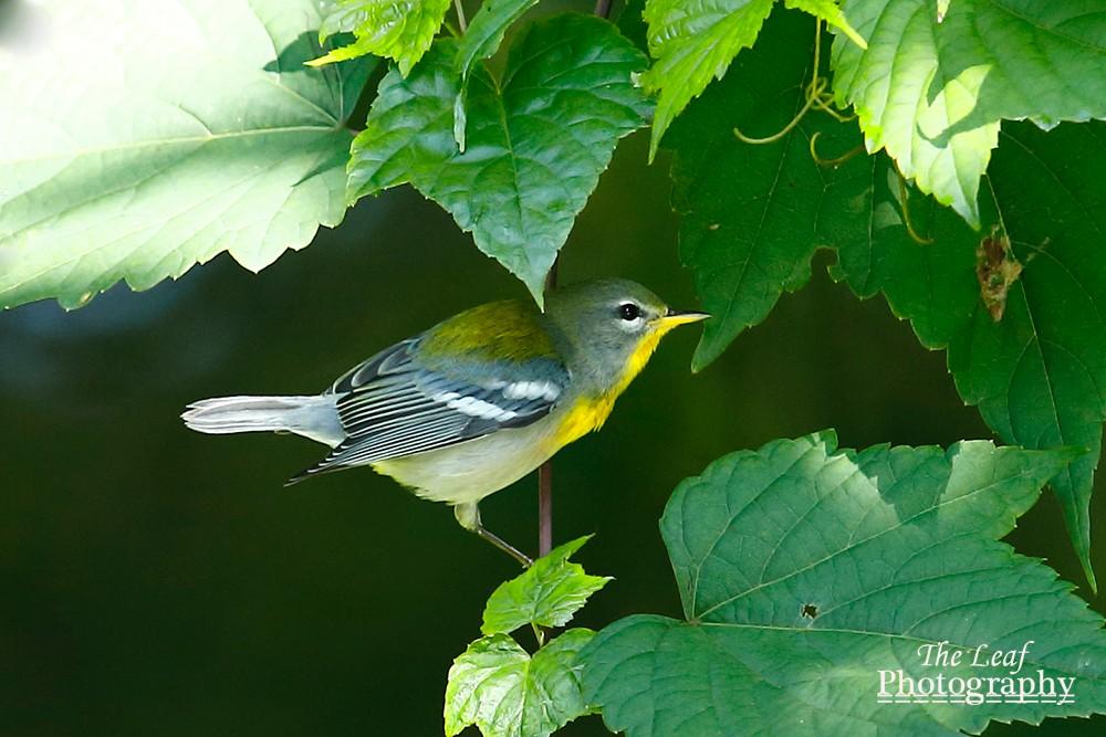 拍鸟好季节        【一片叶】_图1-18