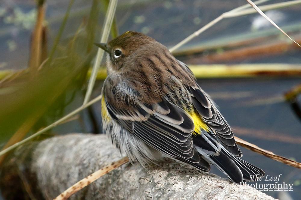 拍鸟好季节        【一片叶】_图1-20