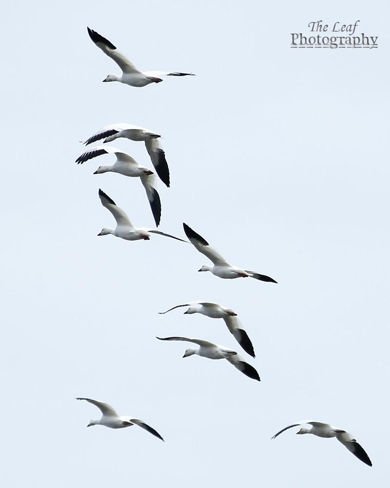 拍鸟好季节        【一片叶】_图1-33
