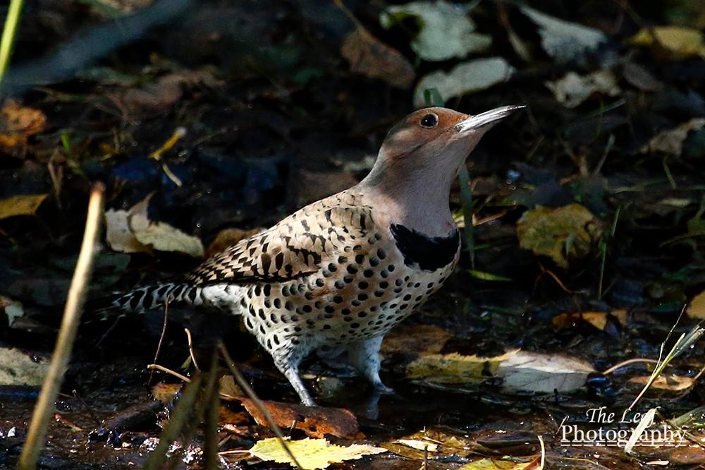拍鸟好季节        【一片叶】_图1-36