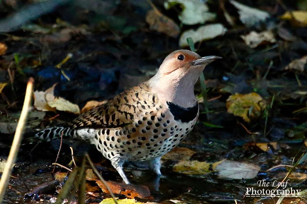 拍鸟好季节        【一片叶】_图1-37