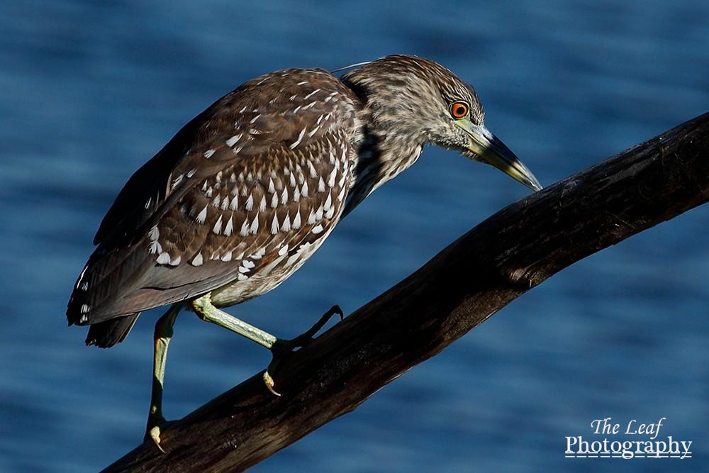 拍鸟好季节        【一片叶】_图1-41