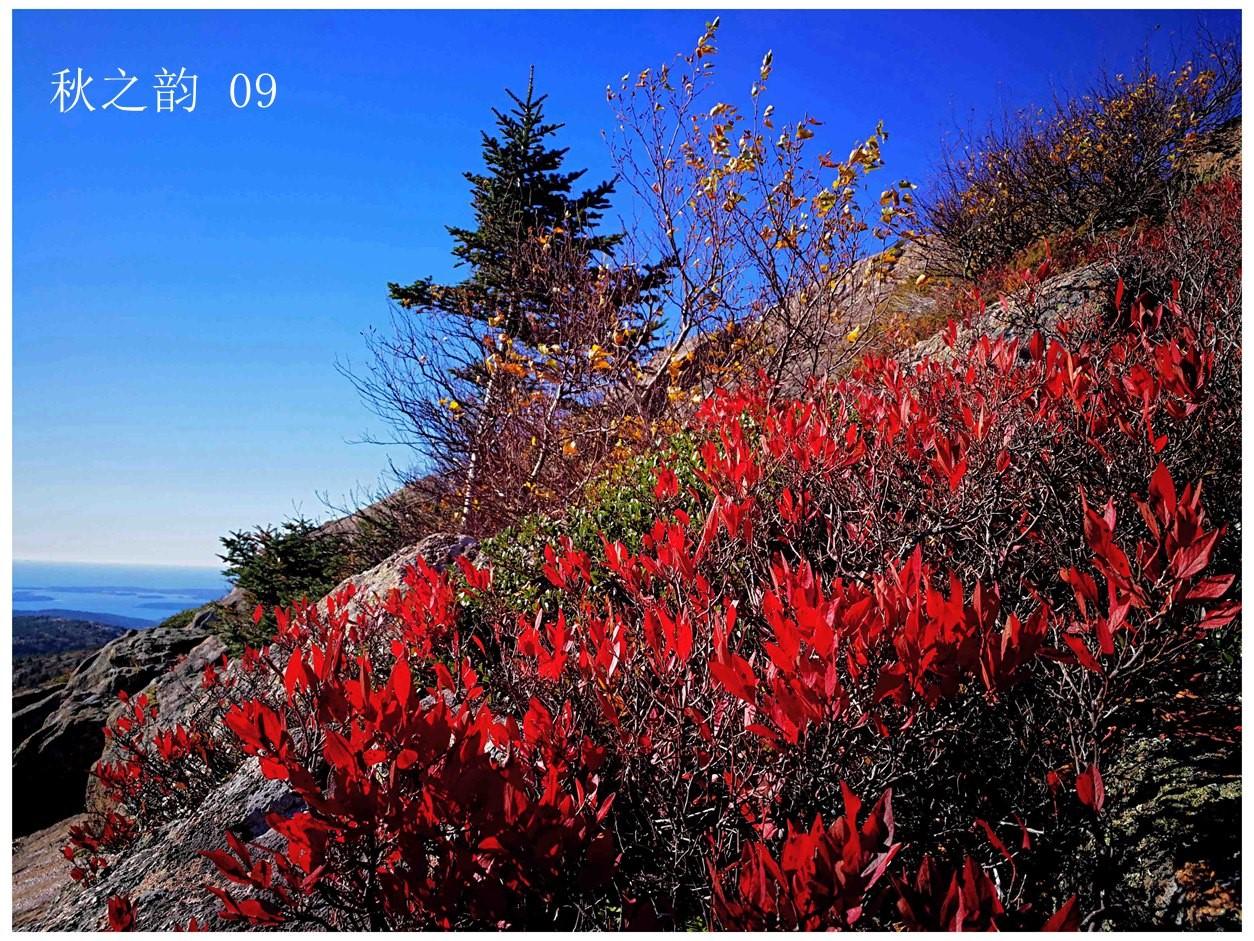 看万山红遍,层林尽染_图1-1