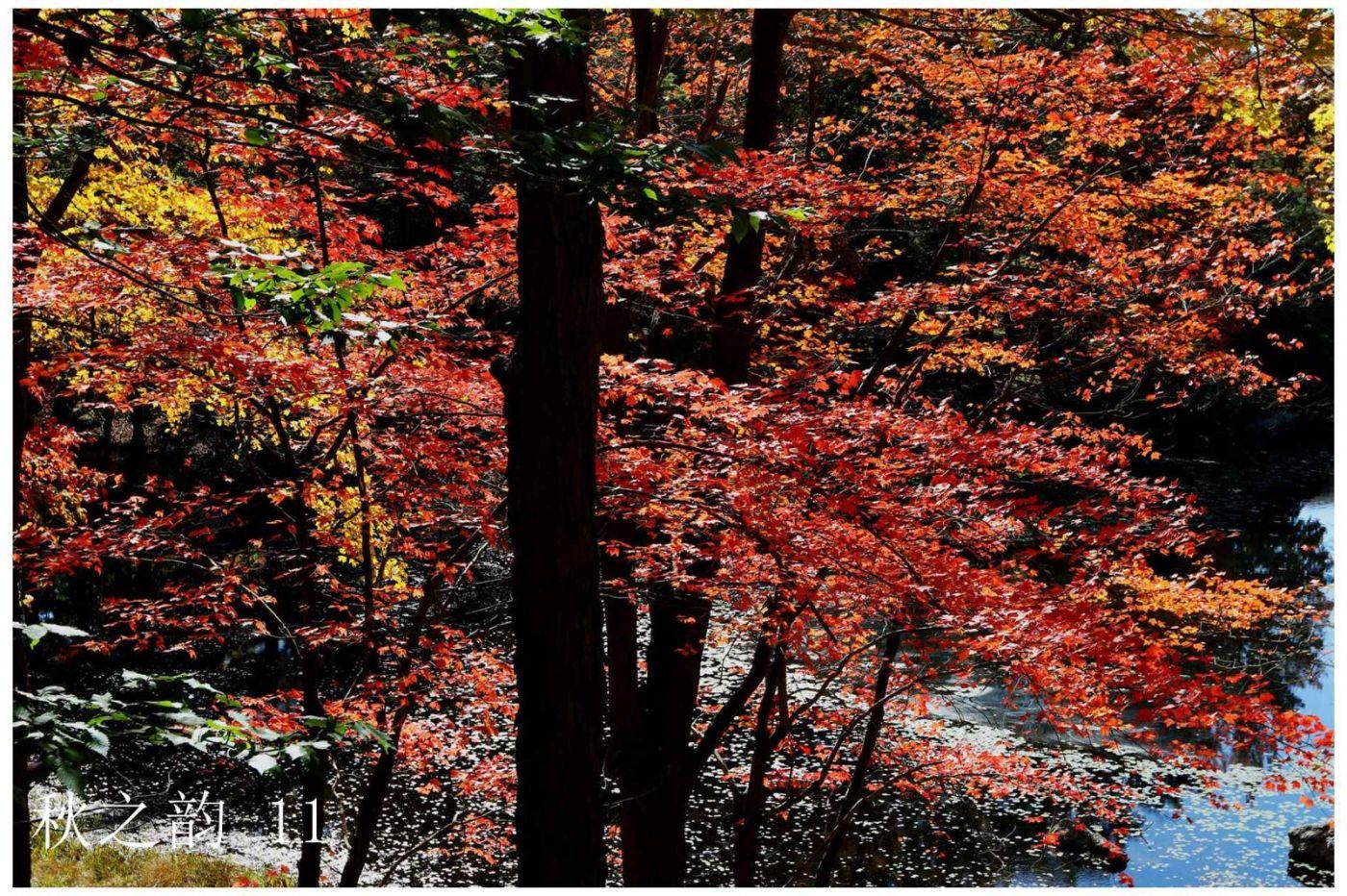 看万山红遍,层林尽染_图1-3