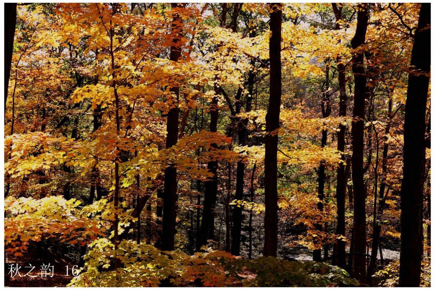 看万山红遍,层林尽染_图1-8