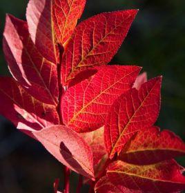 秋在胡德山