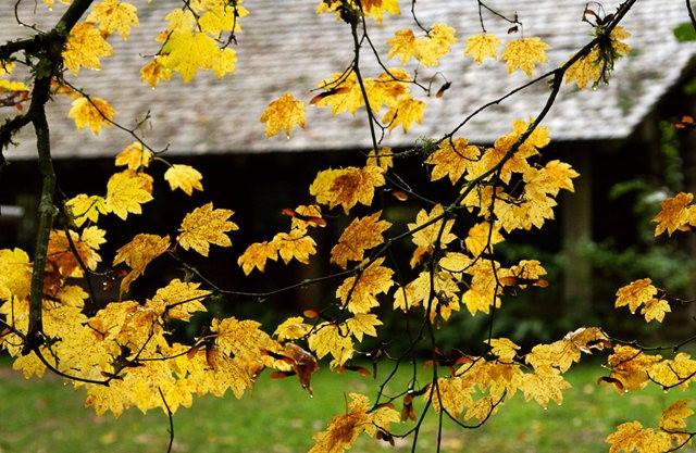 秋在银瀑布公园_图1-2