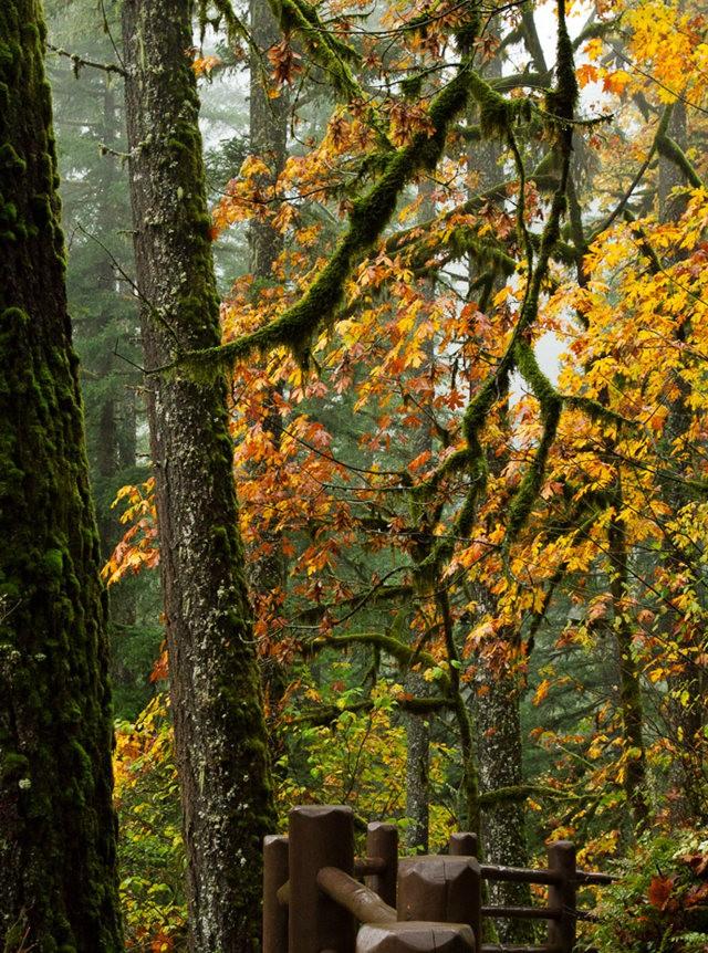 秋在银瀑布公园_图1-3