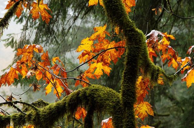秋在银瀑布公园_图1-4