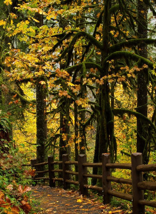 秋在银瀑布公园_图1-5