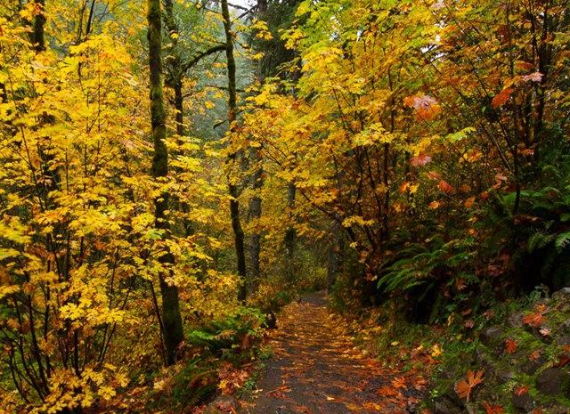秋在银瀑布公园_图1-8