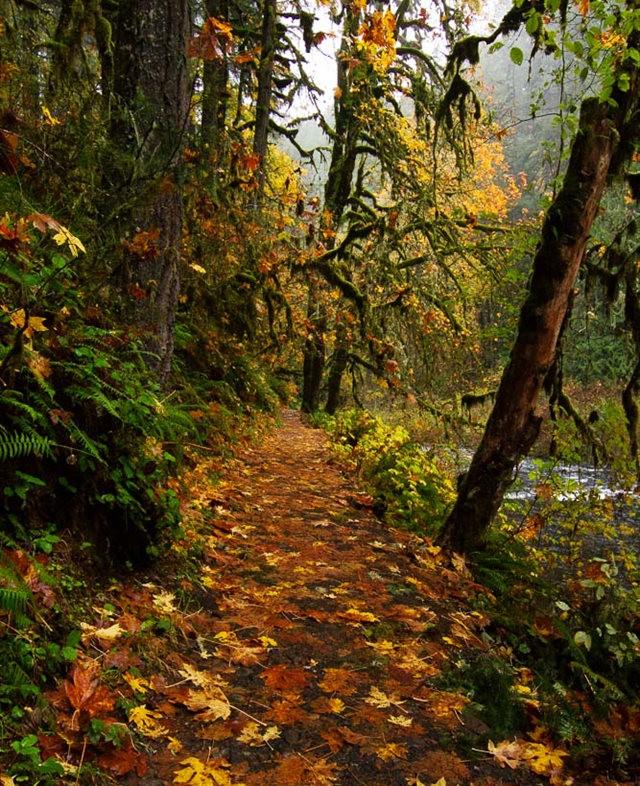 秋在银瀑布公园_图1-9