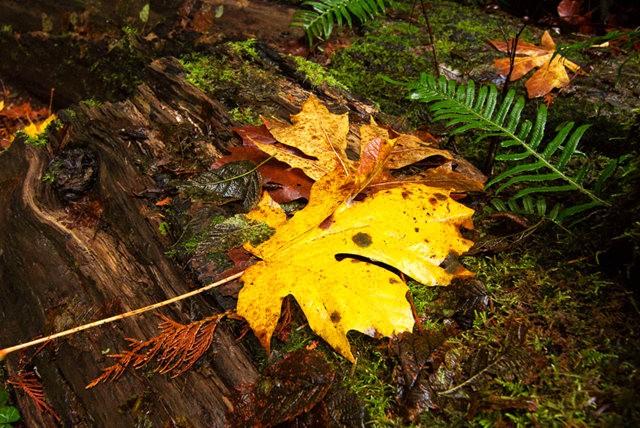秋在银瀑布公园_图1-10