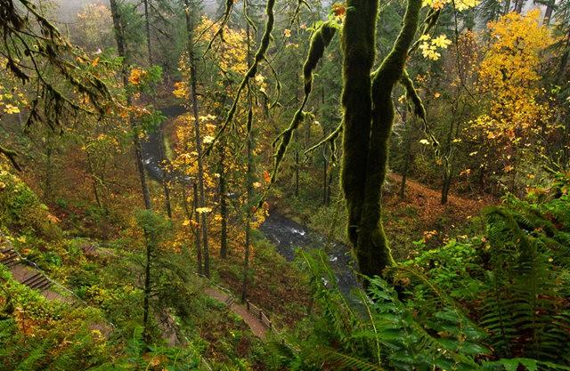 秋在银瀑布公园_图1-11