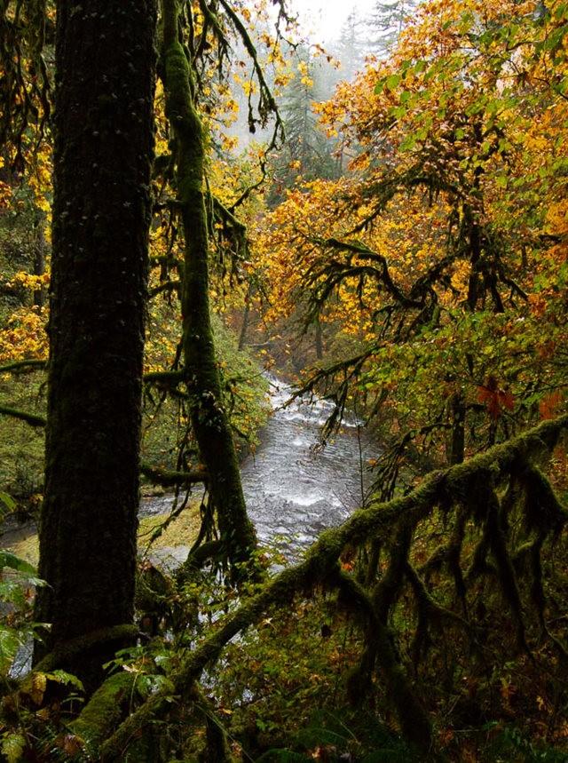 秋在银瀑布公园_图1-14