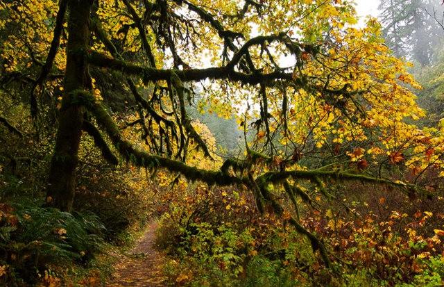 秋在银瀑布公园_图1-15