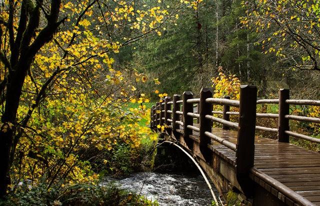 秋在银瀑布公园_图1-16