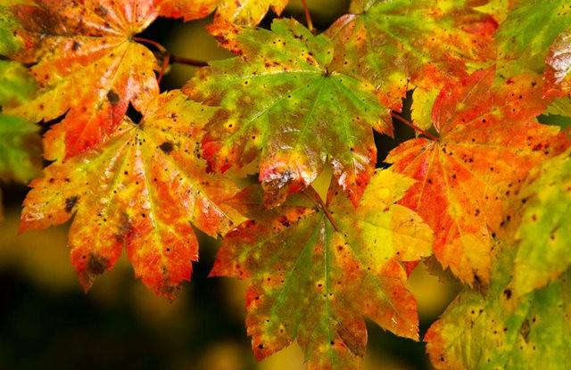 秋在银瀑布公园_图1-19