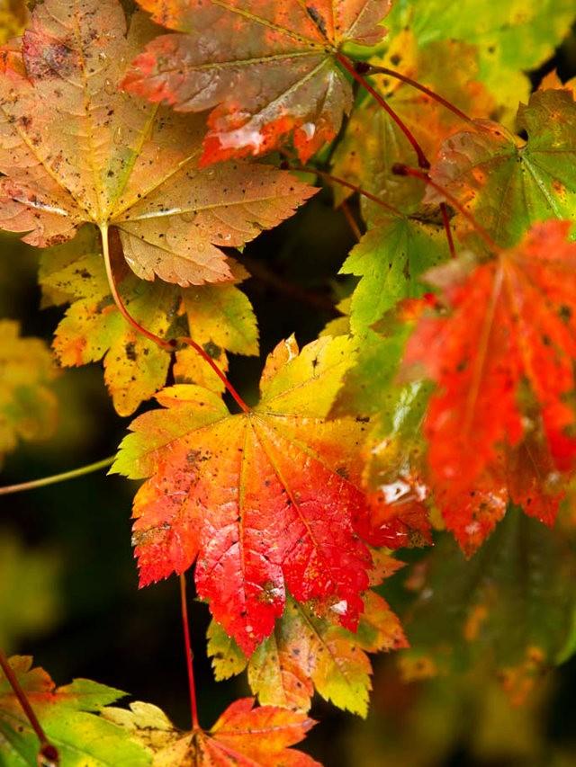 秋在银瀑布公园_图1-20