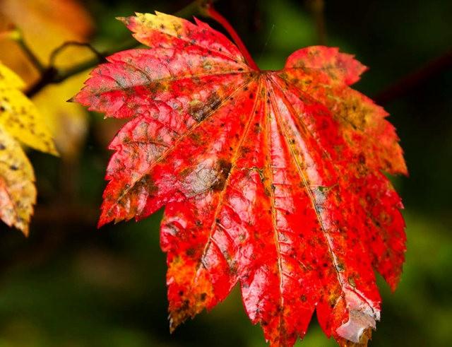 秋在银瀑布公园_图1-21