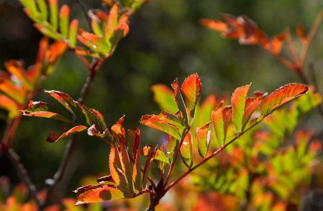 秋在银瀑布公园_图1-22