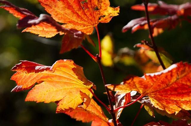 秋在银瀑布公园_图1-23