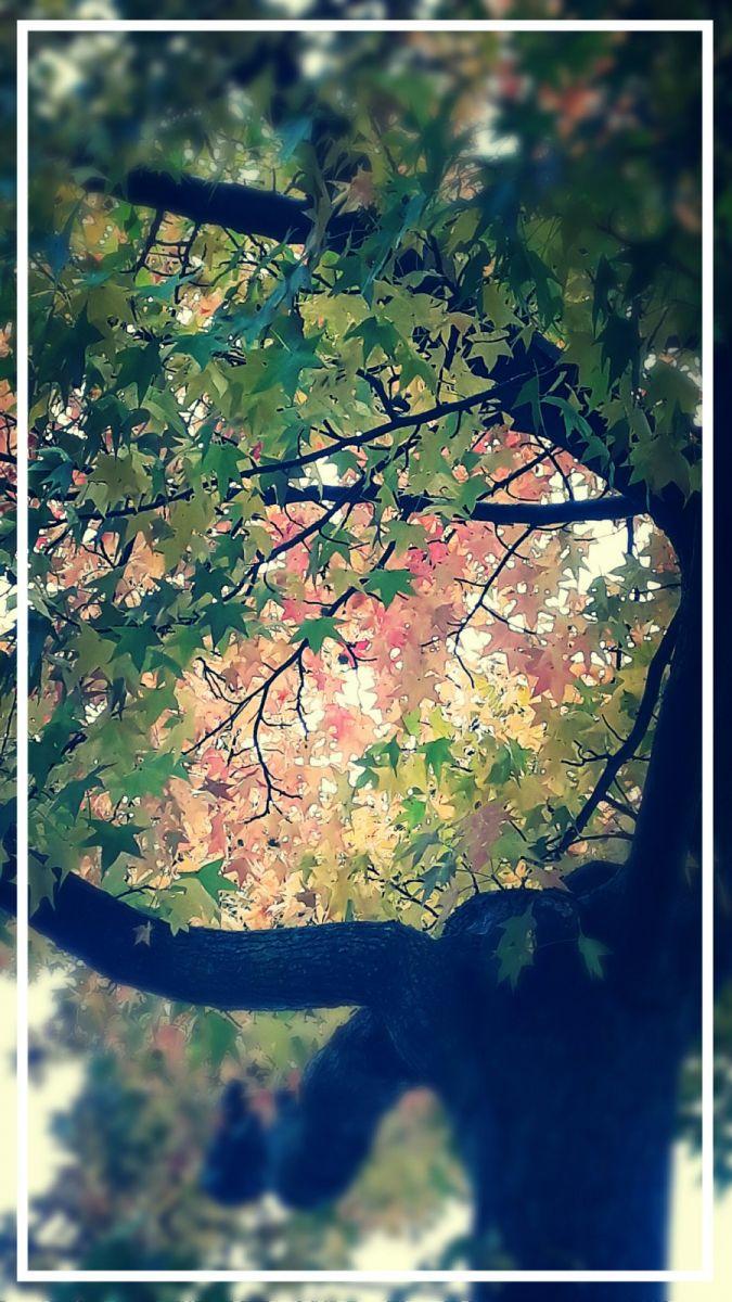秋悄悄的來到_图1-5