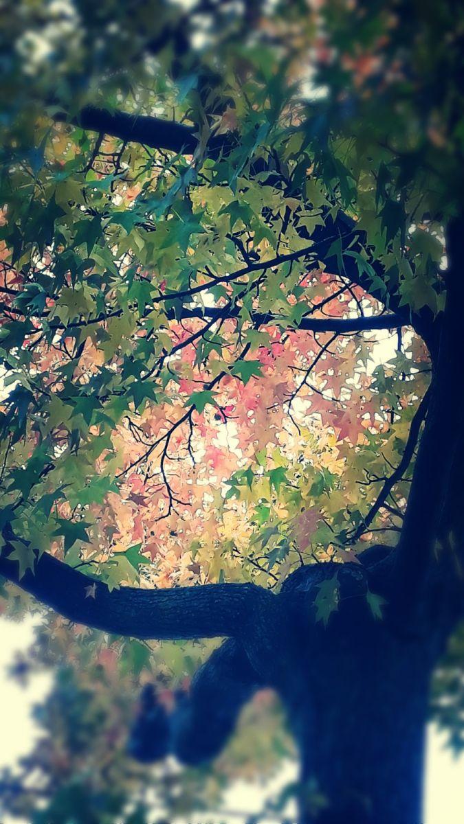 秋悄悄的來到_图1-11