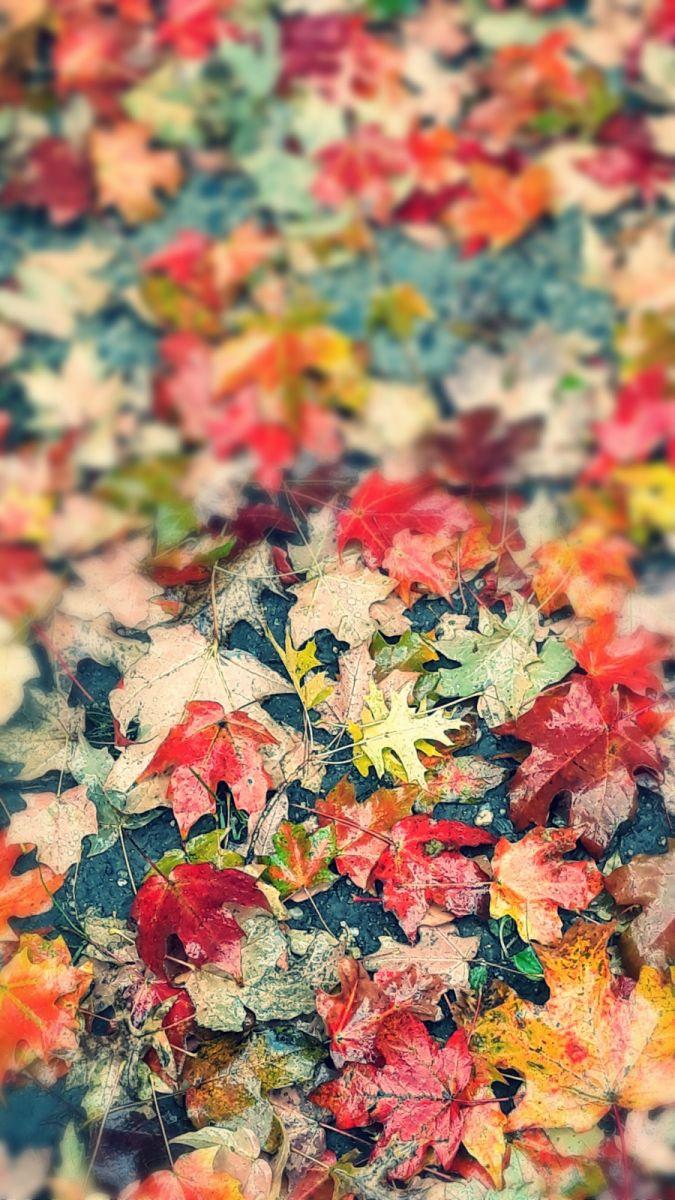 秋悄悄的來到_图1-9