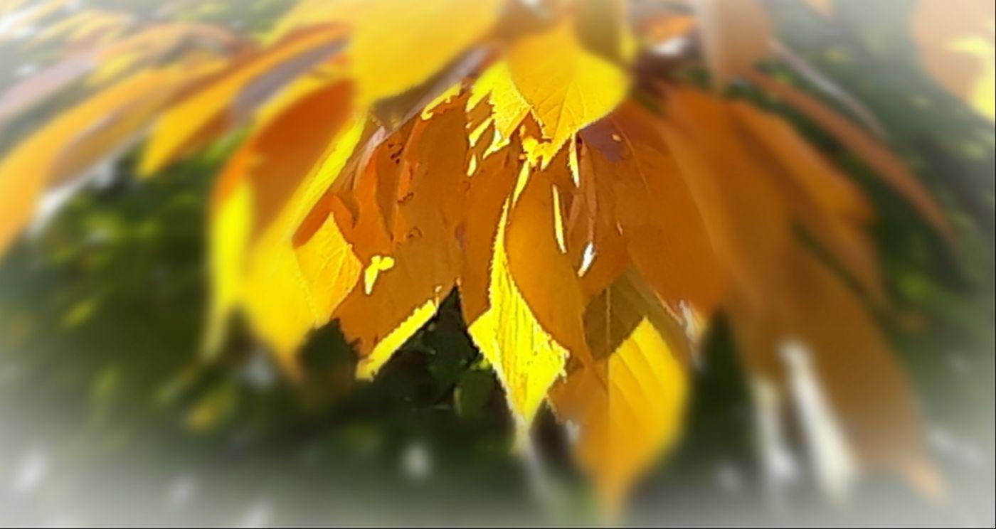 秋悄悄的來到_图1-2
