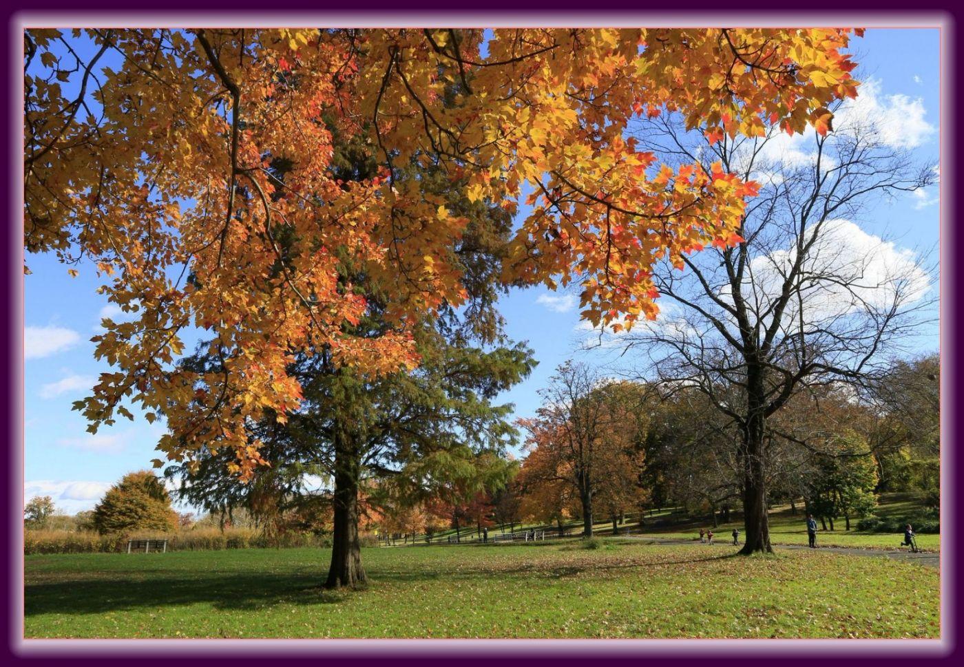秋色满满的凯辛娜公园_图1-2