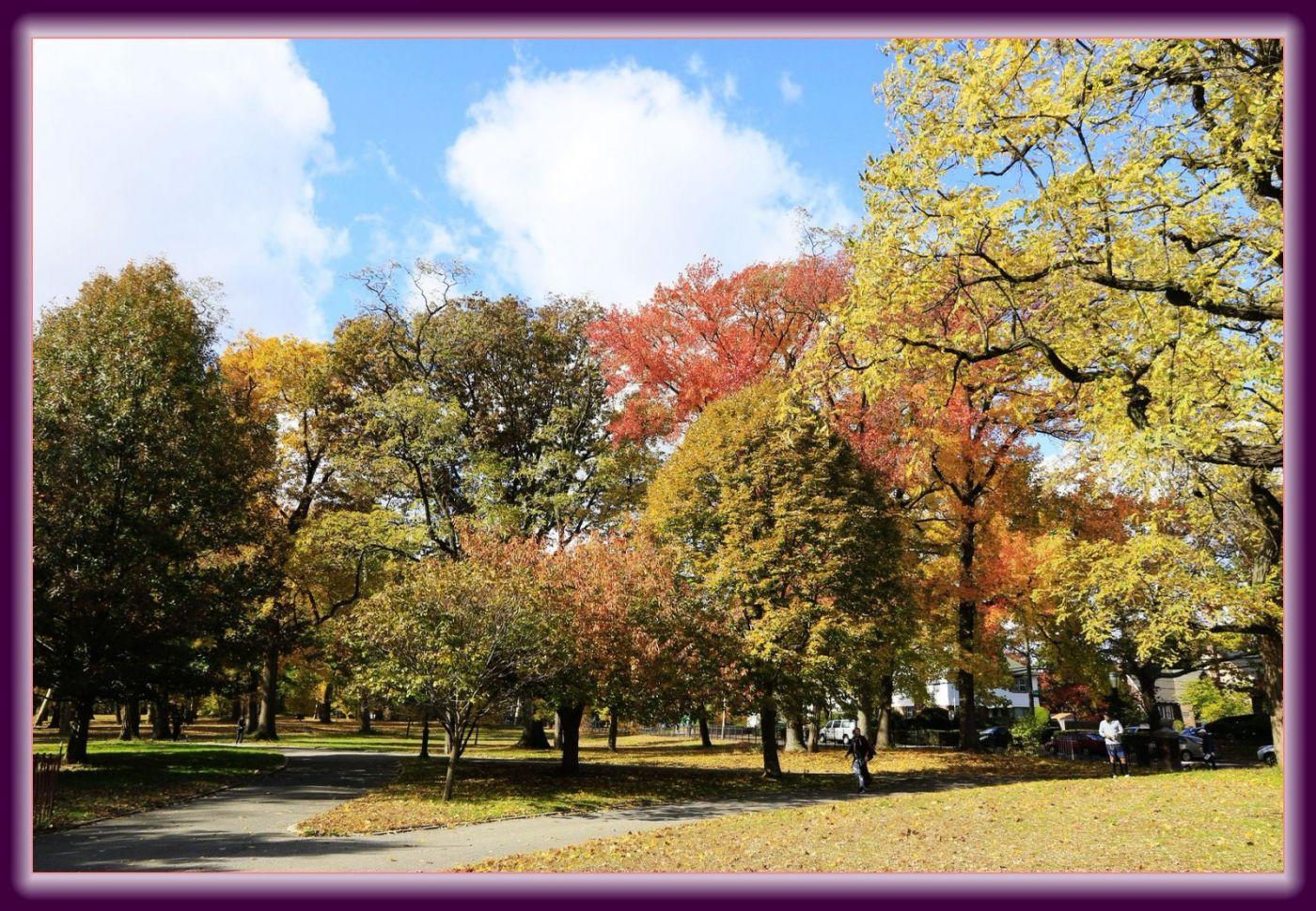 秋色满满的凯辛娜公园_图1-6