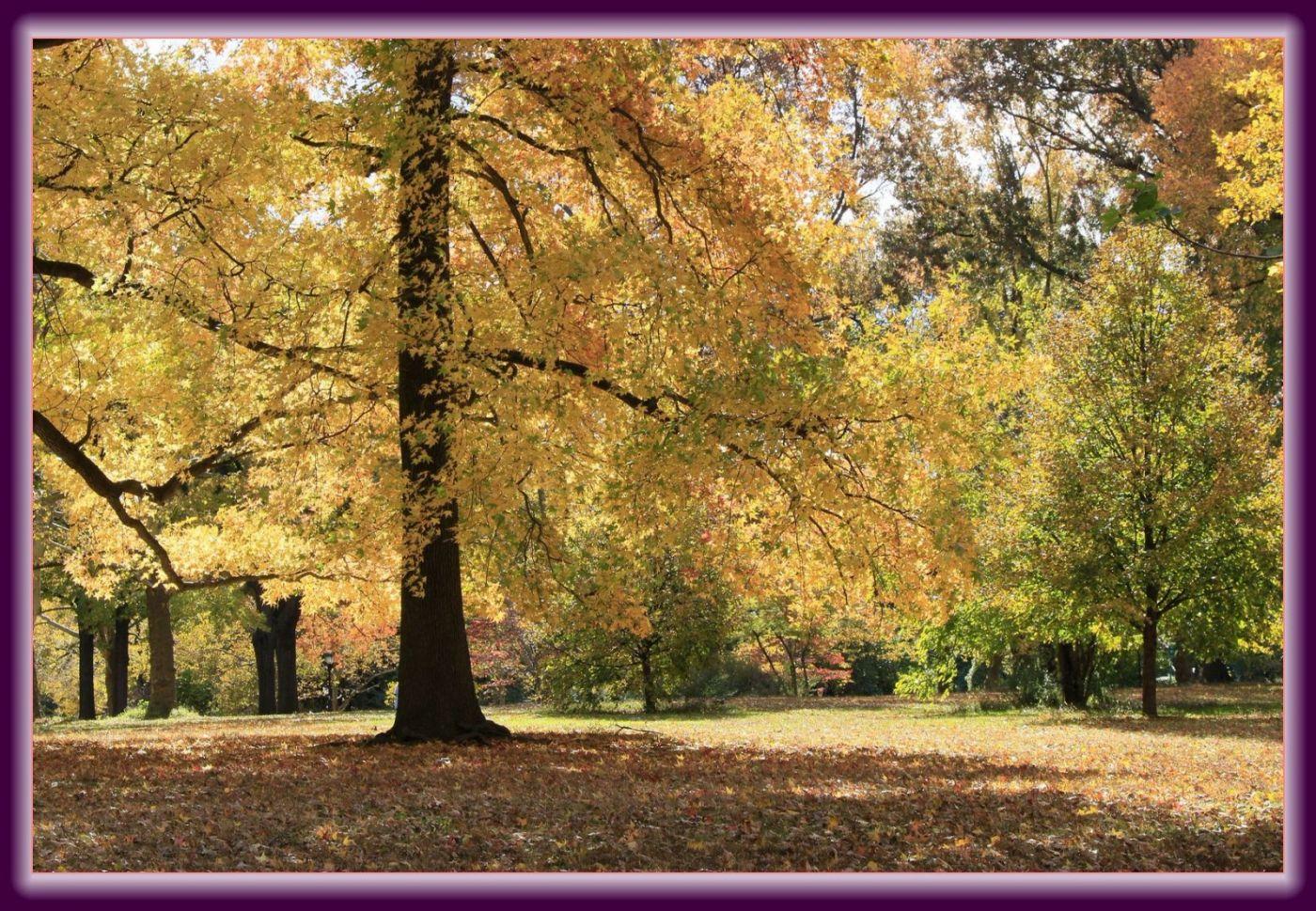 秋色满满的凯辛娜公园_图1-9