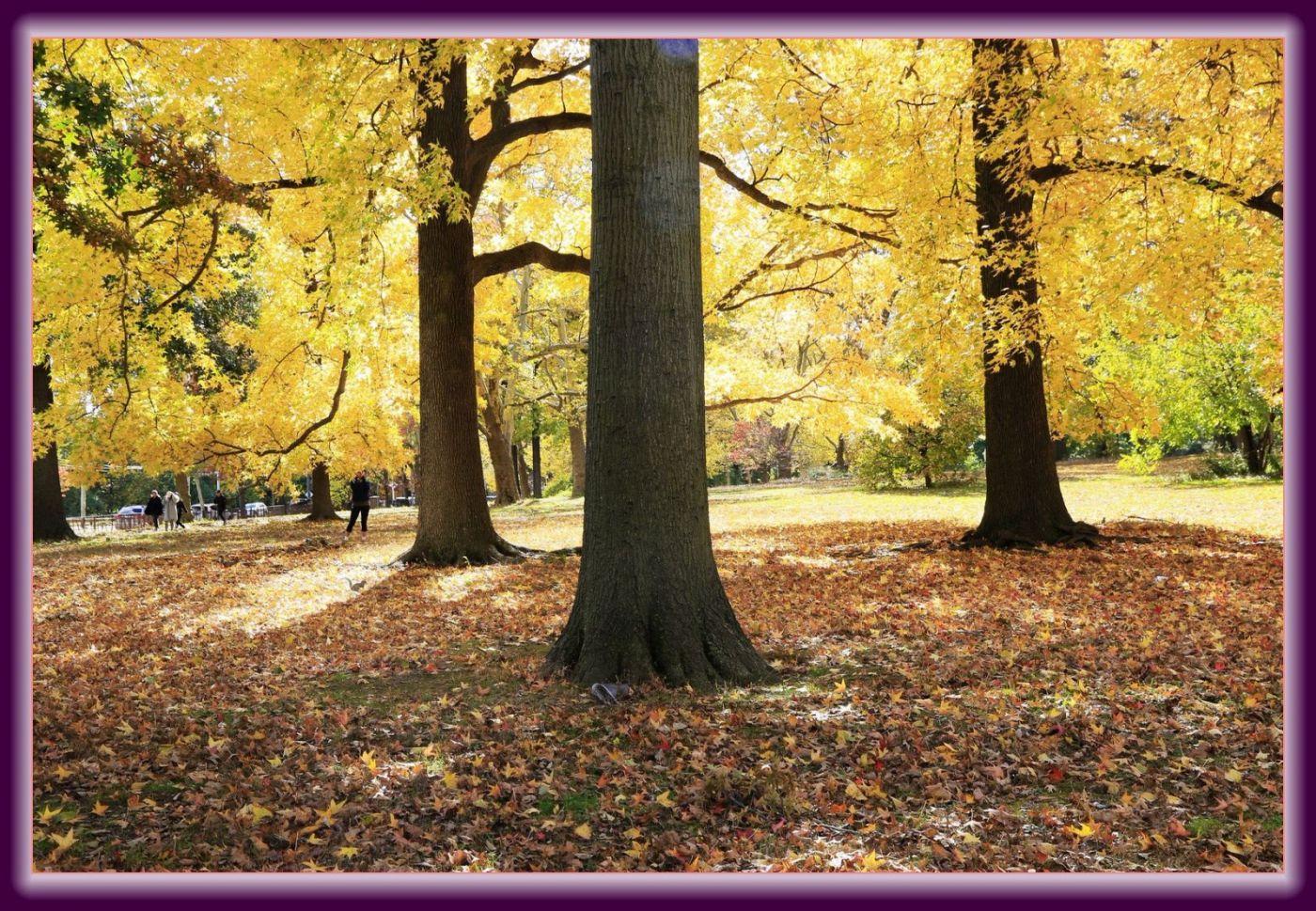 秋色满满的凯辛娜公园_图1-10