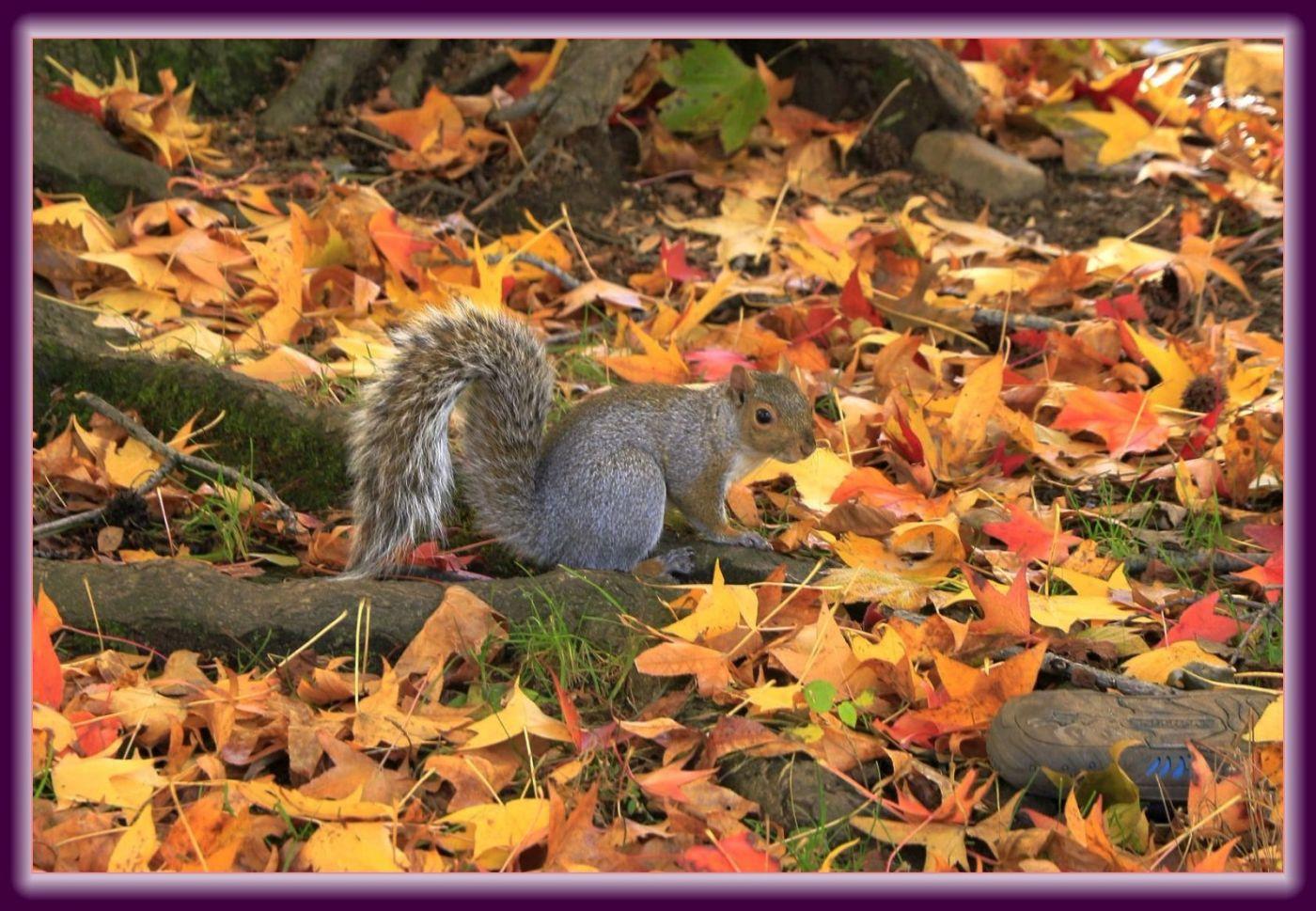 秋色满满的凯辛娜公园_图1-11