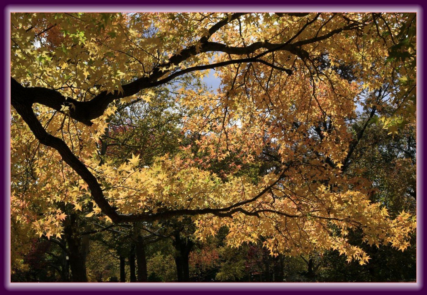 秋色满满的凯辛娜公园_图1-12
