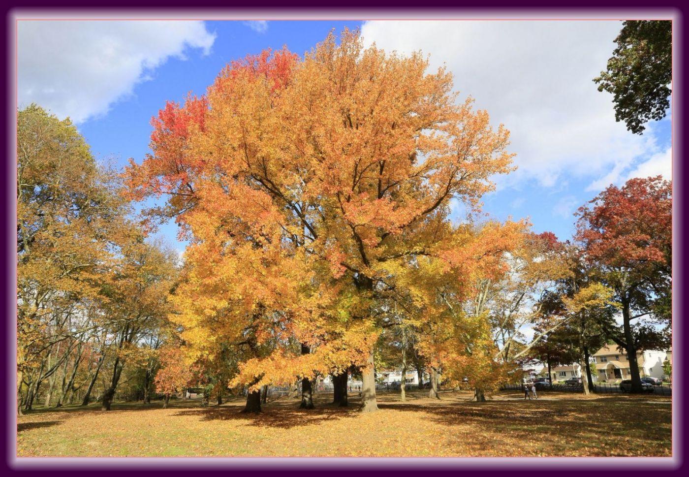 秋色满满的凯辛娜公园_图1-13