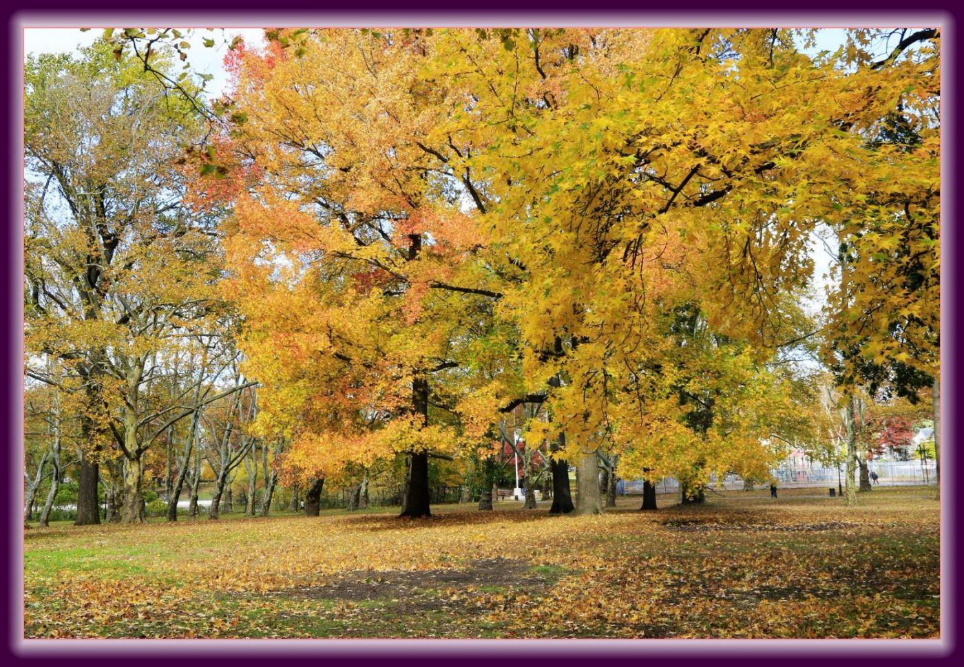秋色满满的凯辛娜公园_图1-14